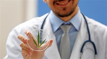 Uso de Canabidiol na medicina veterinária