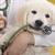 A prevenção do tumor de mamas em cadelas e o controle populacional são os principais fatores considerados na decisão pela castração precoce em cães