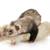 O Suprelorin é um implante de acetato de deslorelina, um agonista do GnRH, que a longo prazo diminui a concentração plasmática de LH e FSH inibindo a reprodução dos animais