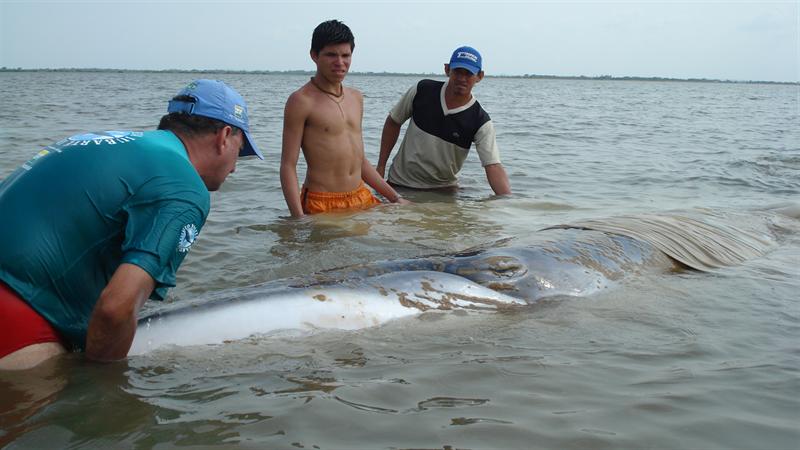 Uma baleia na Amazônia - Parte 2