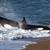 Amizades, terremotos, cativeiro e aquela orca que cuspiu em mim