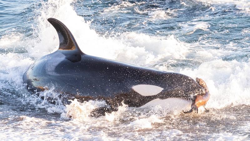 Histórias de Orcas