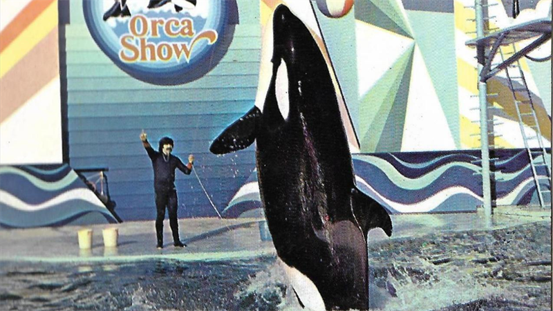 Orca Show, Playcenter.