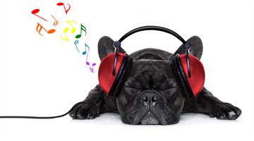 Música e outros sons para cães