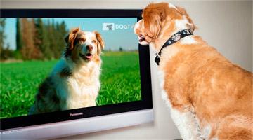 Um canal de TV para cães