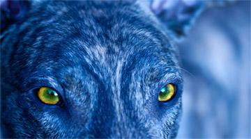 Entenda como os cães enxergam as cores