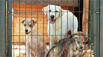 Protetora de cães morre tentando salvar animais de um incêndio