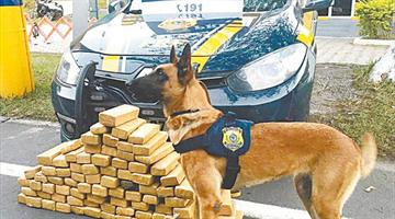 Com auxílio de cães farejadores, polícia bate recordes de apreensão de drogas